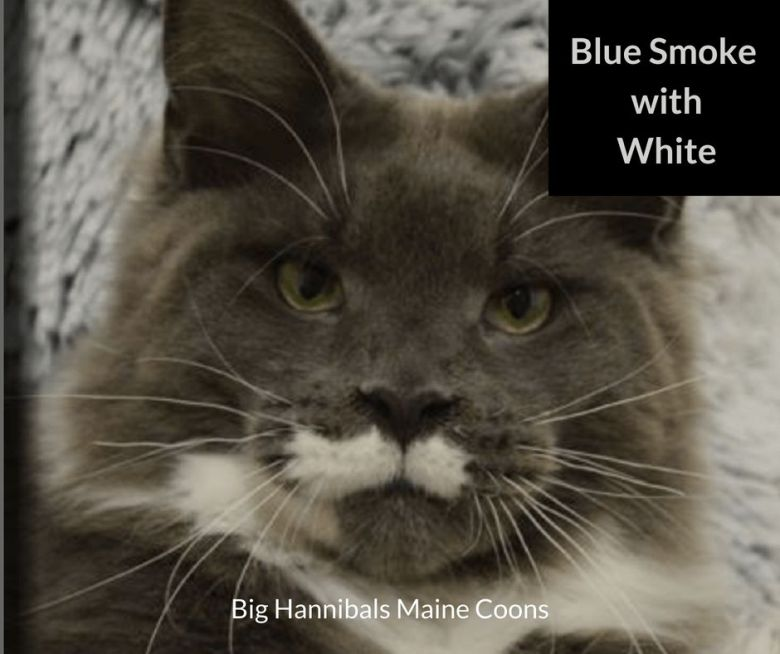 Blue-Smoke-with-White