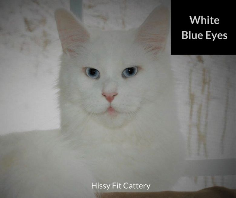 White-Blue-Eyes
