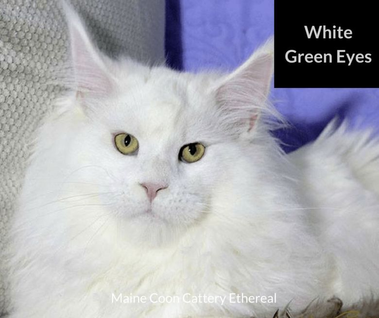 White-Green-Eyes